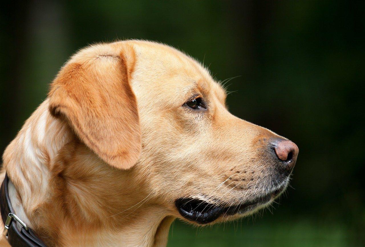 Traumeel hat uns bei vielen Erkrankungen des Tieres geholfen